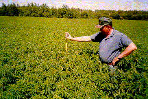 Hemp grows well in North America