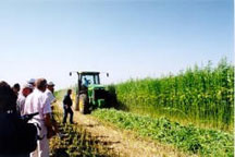 hemp can save family farms